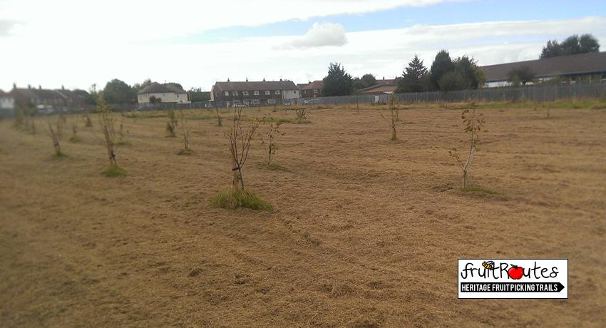 Eastway Primary School orchard in Moreton with trees from Fruit Routes