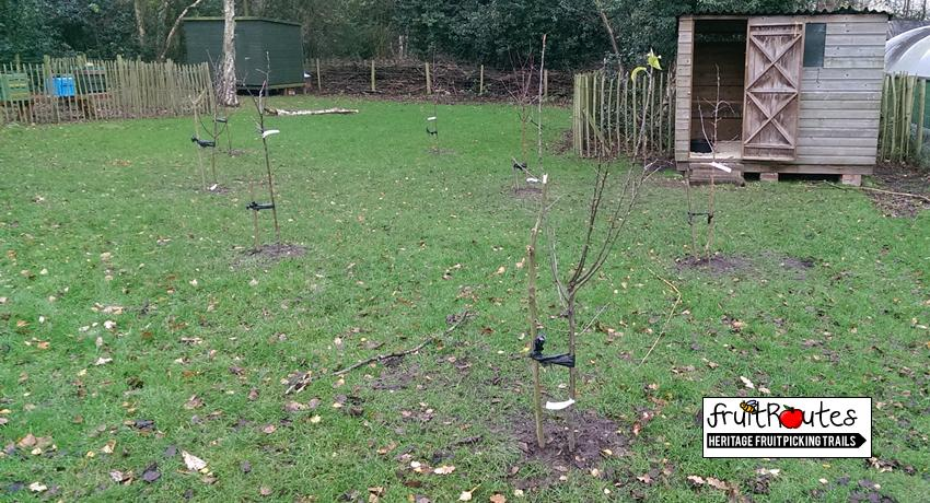 Heritage Apple Trees planted by Fruit Routes at Tam O Shanter Farm