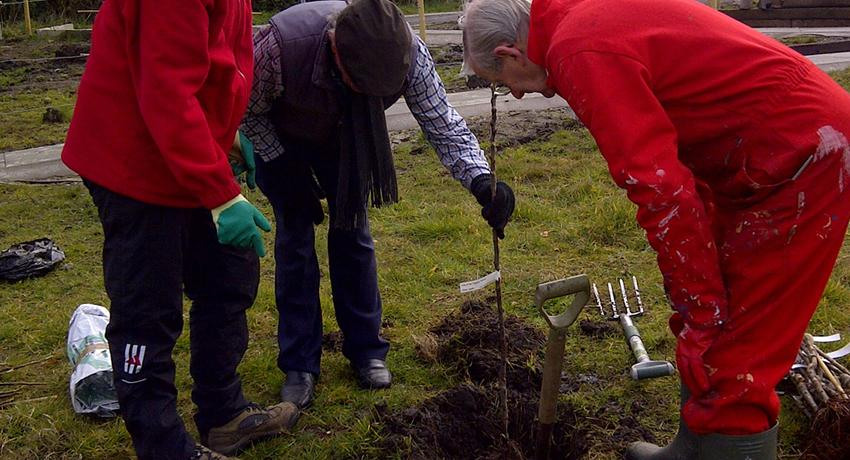 Wallasey Rotarian David Hyde checks the fruit tree is being planted deep enough