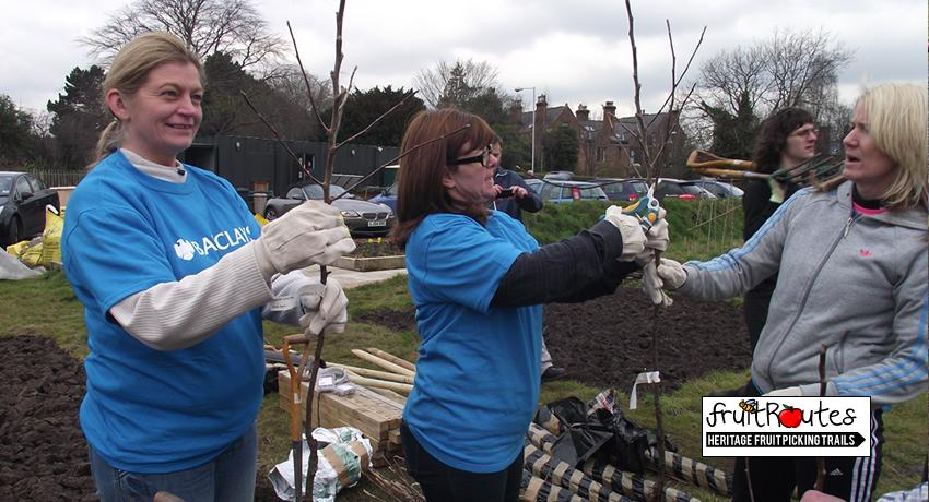 Barclays CSR Team learn to prune fruit trees before planting