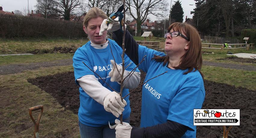 Barclays CSR Team Pruning the top of the fruit tree