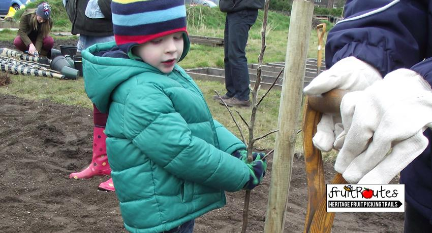 Toddler planting a fruit tree at the EKG Fruit Routes orchard