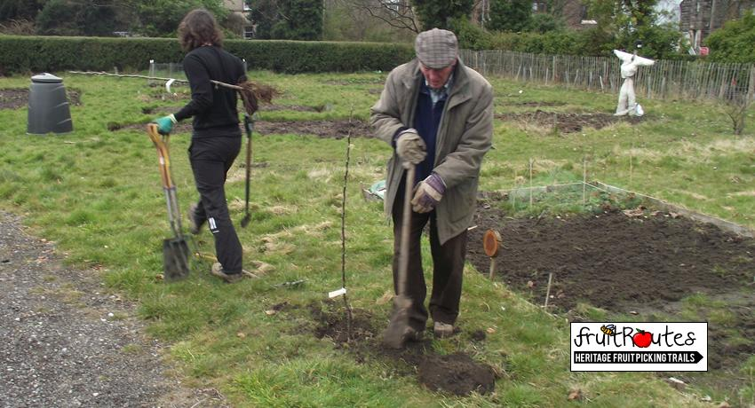 Planting apple trees on the EKG site to create a Fruit Route around the path