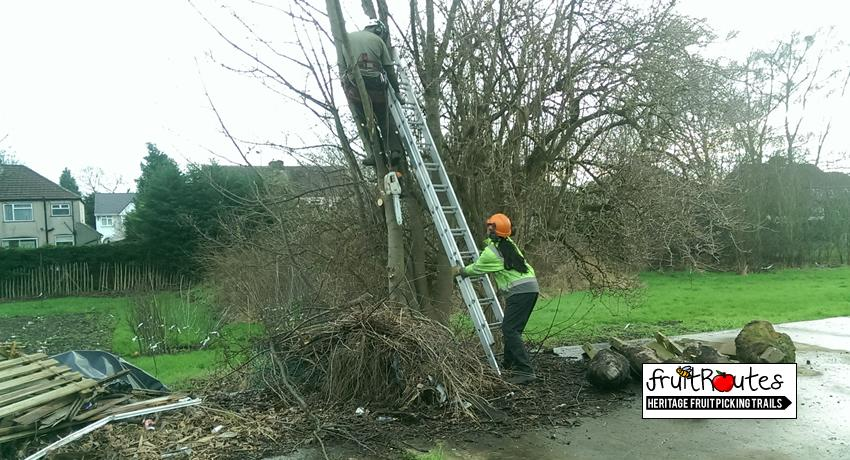 North West Tree Surgeons CSR day at the Lyndale Orchard
