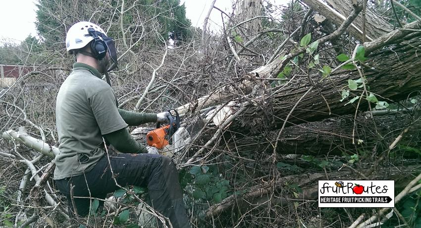North West Tree Care removes dangerous trees at Lyndale Orchard