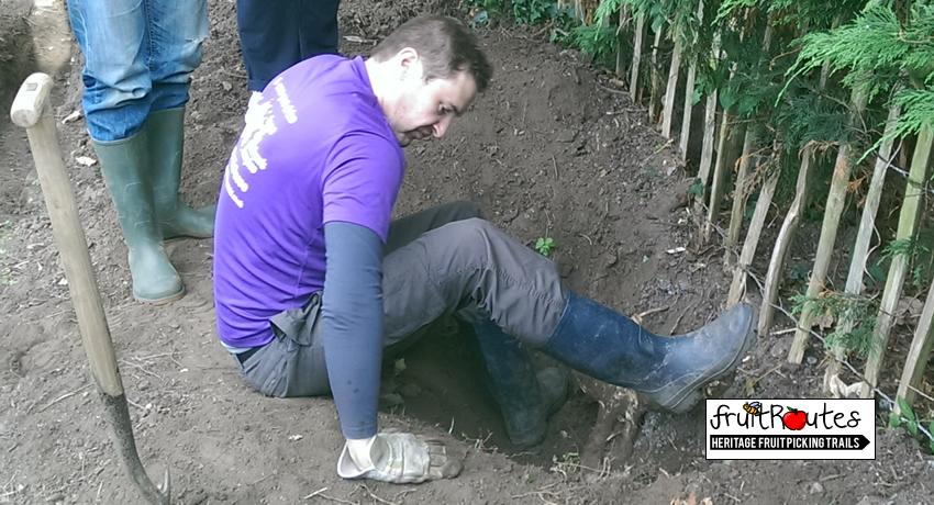 O2 Telefonica CSR Team member versus tree roots at the Fruit Routes Lyndale Orchard
